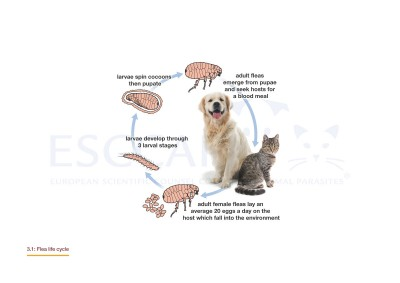 GL3/MG3: Control of Ectoparasites in Dogs and Cats