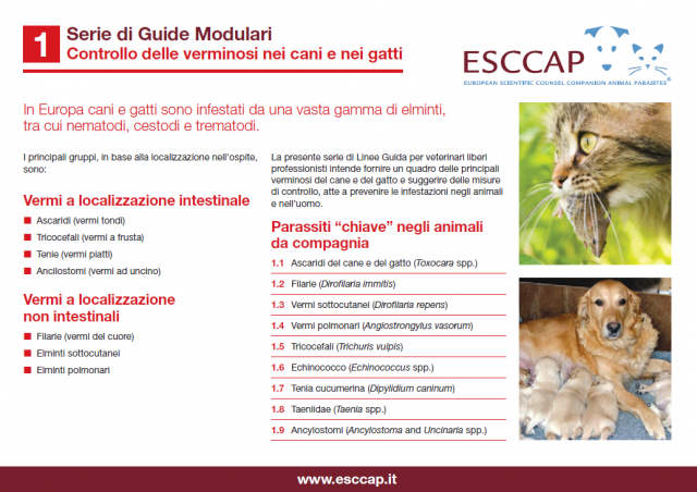 Modular guide 1 now available in Italian